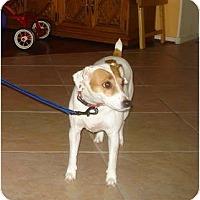 Adopt A Pet :: MYA - Scottsdale, AZ