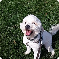 Adopt A Pet :: Guiness - Santa Ana, CA