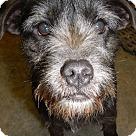 Adopt A Pet :: C.J.
