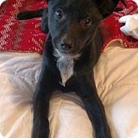 Adopt A Pet :: Cara - Knoxville, TN