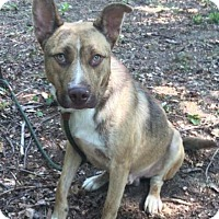 Adopt A Pet :: Charley - Windham, NH
