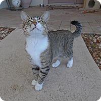 Adopt A Pet :: MYLO...ADOPTED! - Palm Coast, FL