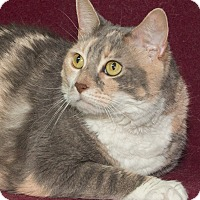 Adopt A Pet :: Cecilia - Elmwood Park, NJ