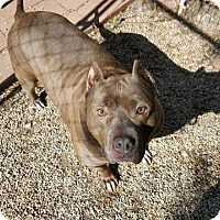 Adopt A Pet :: Hippa - Racine, WI