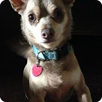 Adopt A Pet :: Smokey - Killian, LA