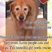 Adopt A Pet :: JoLee - Las Vegas, NV