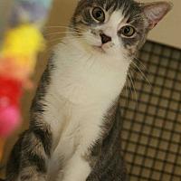 Adopt A Pet :: Marina - Cumberland and Baltimore, MD