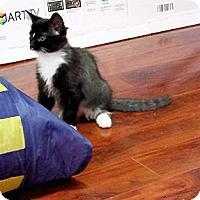 Adopt A Pet :: Vegas - Verdun, QC