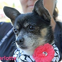 Adopt A Pet :: Charlotte - Lake Forest, CA
