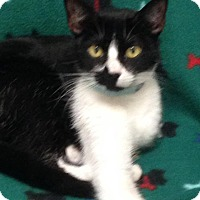 Adopt A Pet :: Caroline - St. Francisville, LA