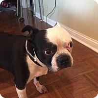 Adopt A Pet :: ROSCOE 2 - Terre Haute, IN