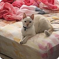 Adopt A Pet :: Alfredo - Sarasota, FL