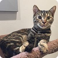 Adopt A Pet :: Darla - Lafayette, NJ