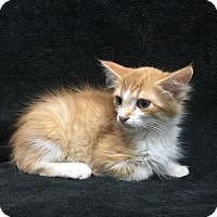 Adopt A Pet :: CORBIN - Watauga, TX