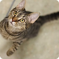Adopt A Pet :: Lady Catelyn - Verona, NJ