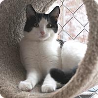 Adopt A Pet :: Solitaire - McCormick, SC