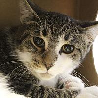 Adopt A Pet :: Vadim Wit - Chicago, IL