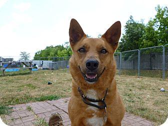 Spitz (Unknown Type, Medium) Mix Dog for adoption in Grayslake, Illinois - Pensacola