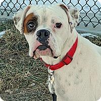 Adopt A Pet :: Petey - Cheyenne, WY