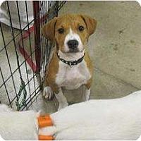 Adopt A Pet :: Tony - Alexandria, VA