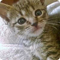 Adopt A Pet :: Molly - Reston, VA