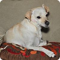 Adopt A Pet :: Zoey - Surrey, BC