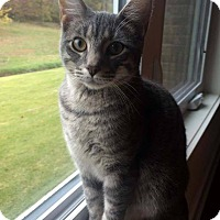 Adopt A Pet :: Sharpie - Bentonville, AR