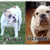 Adopt A Pet :: BONDED PAIR Flaca & Gordo - Decatur, IL