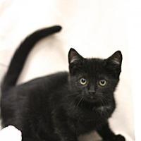 Adopt A Pet :: Oswald - Sacramento, CA