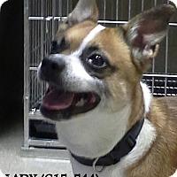 Adopt A Pet :: STELLA - Tiffin, OH