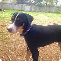 Adopt A Pet :: Thomas - West Hartford, CT