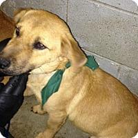 Adopt A Pet :: Holly - Pompton lakes, NJ