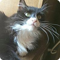 Adopt A Pet :: Sylvester - Ennis, TX