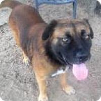 Husky/Labrador Retriever Mix Dog for adoption in Darien, Georgia - Duke