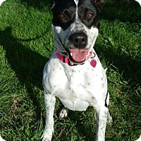 Adopt A Pet :: Lizzy - Alta Loma, CA