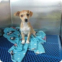 Adopt A Pet :: Rebel - ready 5/28 - Sparta, NJ