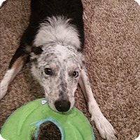 Adopt A Pet :: Johnny (Torque) - Midwest (WI, IL, MN), WI