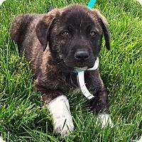 Adopt A Pet :: I'M ADPTD Jack &  Jill Jack St - Oswego, IL