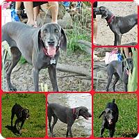 Adopt A Pet :: Daisy Mae - Davenport, FL
