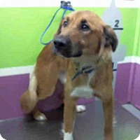 Adopt A Pet :: BERKLEY - Houston, TX