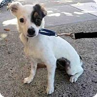 Adopt A Pet :: SQUEAK - San Francisco, CA