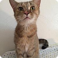 Adopt A Pet :: adela - Salem, OH
