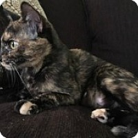 Adopt A Pet :: Autumn - McHenry, IL