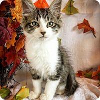 Adopt A Pet :: Knox - Fredericksburg, TX