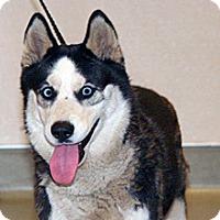 Adopt A Pet :: Matty - Wildomar, CA