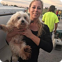 Maltese Dog for adoption in Elgin, Illinois - Griffey