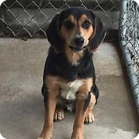 Adopt A Pet :: Milo - Maysville, KY