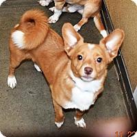 Adopt A Pet :: Fox - San Jacinto, CA