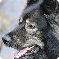 Adopt A Pet :: Major - Ottawa, ON