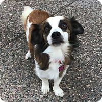 Adopt A Pet :: Robbie - Concord, CA